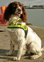 Image of Revenue's canine detector dog, Chip